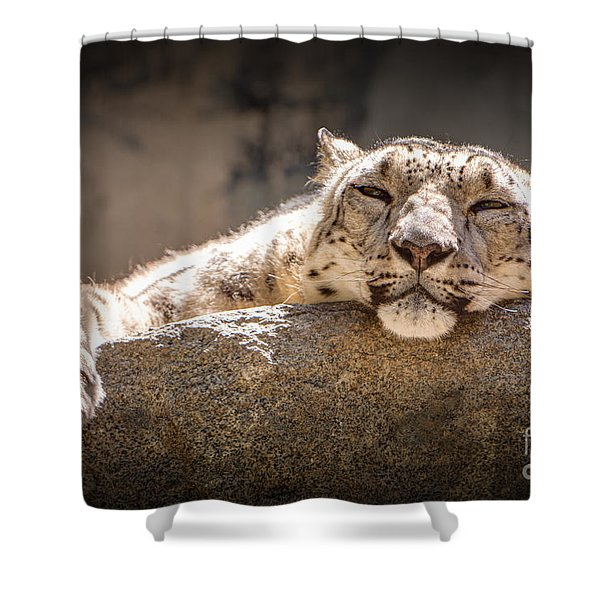 Shower Curtain featuring the photograph Snow Leopard Relaxing by John Wadleigh