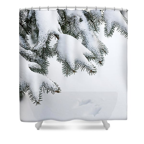 Snow On Winter Branches Shower Curtain