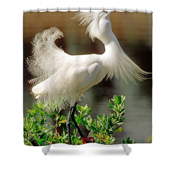 Snowy Egret Egretta Thula Shower Curtain