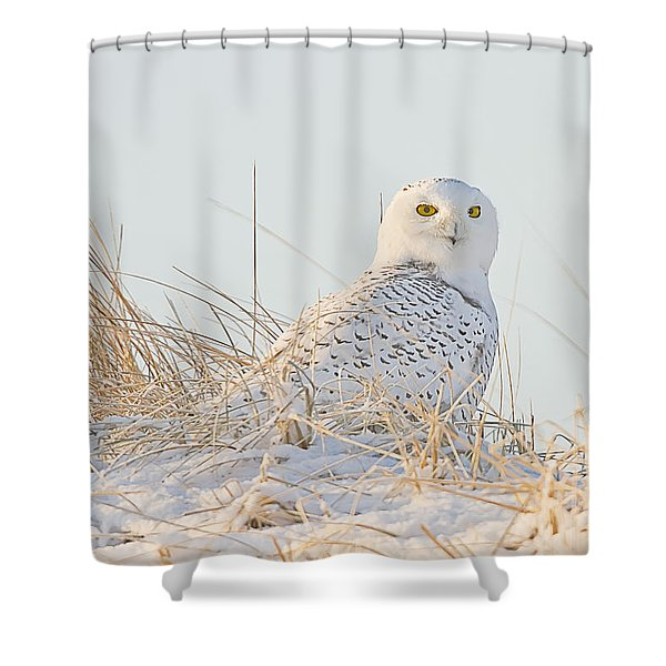Snowy Owl In The Snow Covered Dunes Shower Curtain