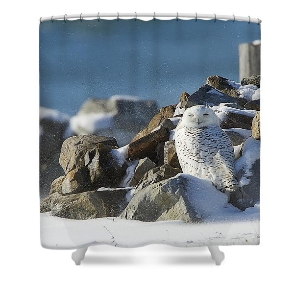 Snowy Owl On A Rock Pile Shower Curtain