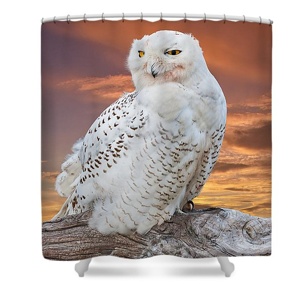 Snowy Owl Perched At Sunset Shower Curtain