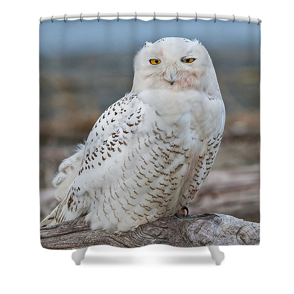 Snowy Owl Watching From A Driftwood Perch Shower Curtain