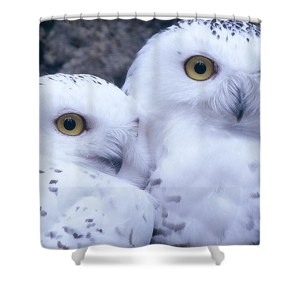 Snowy Owls Shower Curtain
