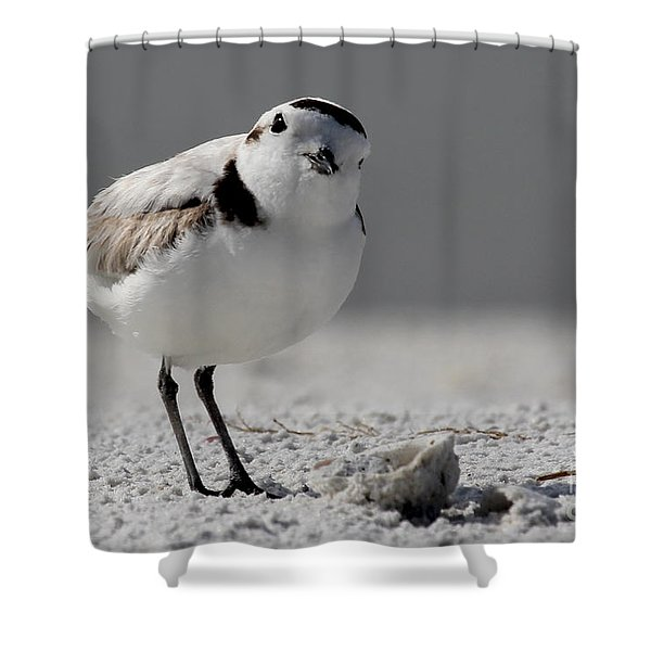 Snowy Plover Shower Curtain
