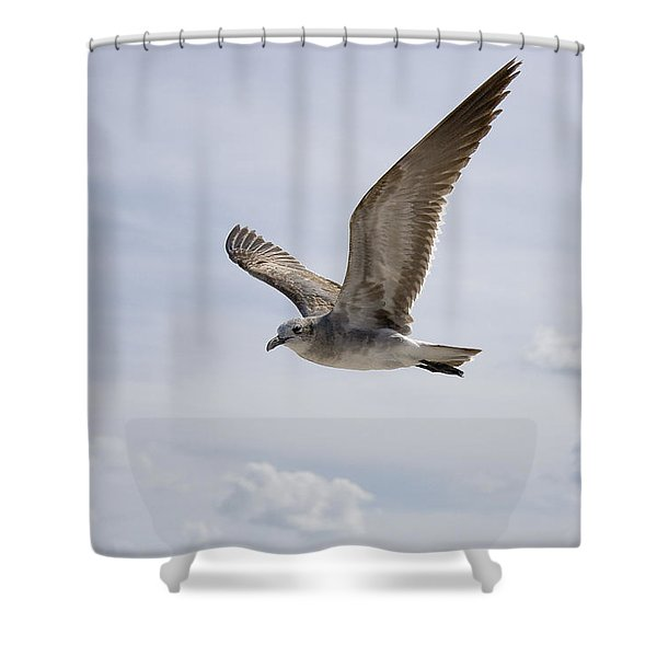 Soaring Gull Shower Curtain