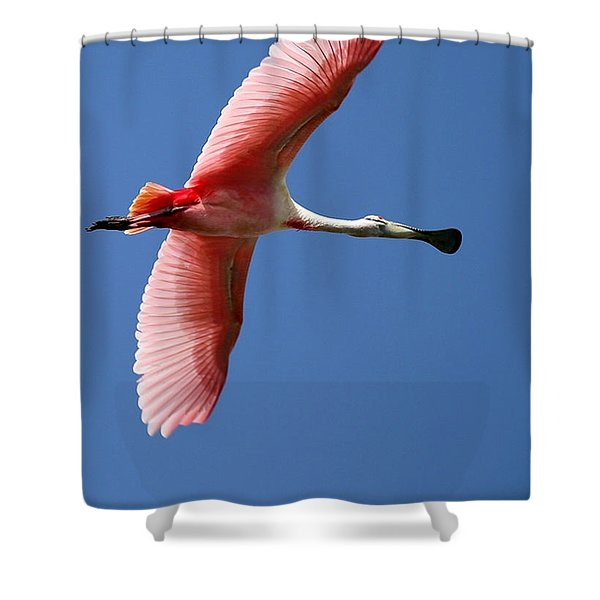 Soaring High Roseate Spoonbill Shower Curtain