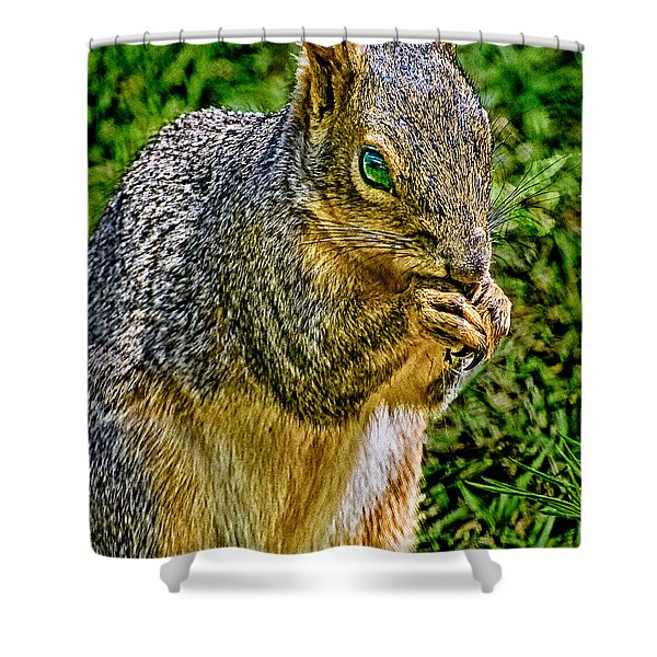 Some Squirrels Are Big Shower Curtain