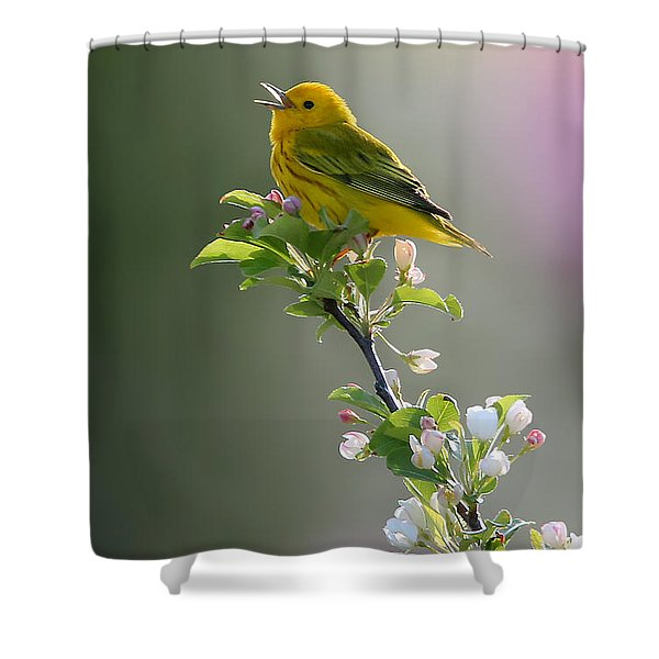 Song Of Spring Shower Curtain