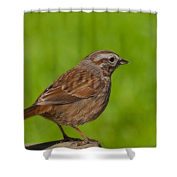 Song Sparrow On A Log Shower Curtain