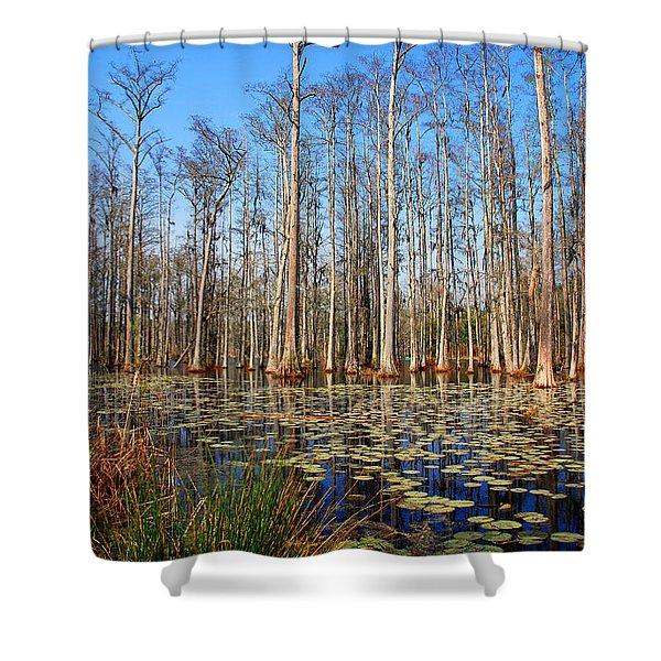 South Carolina Swamps Shower Curtain