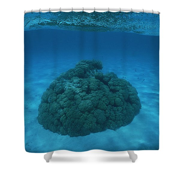 South Pacific - French Polynesia Shower Curtain