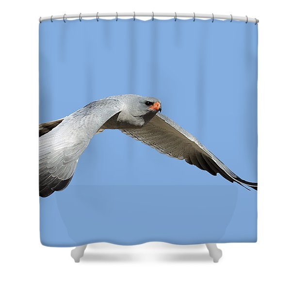 Southern Pale Chanting Goshawk In Flight Shower Curtain