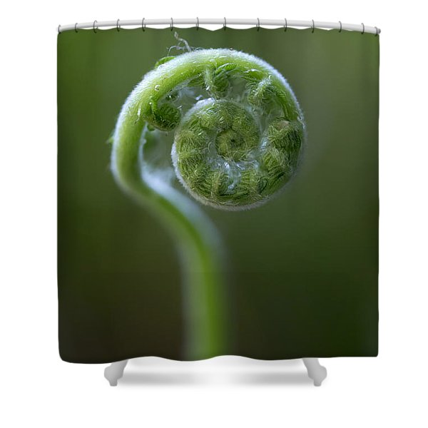 Southern Shield Fern Shower Curtain