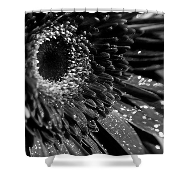 Sparkling Gerbera In Monochrome Shower Curtain