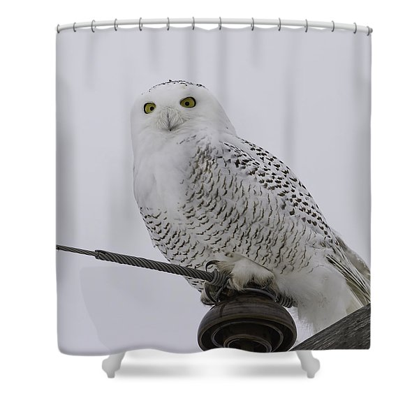 Special Owl Shower Curtain