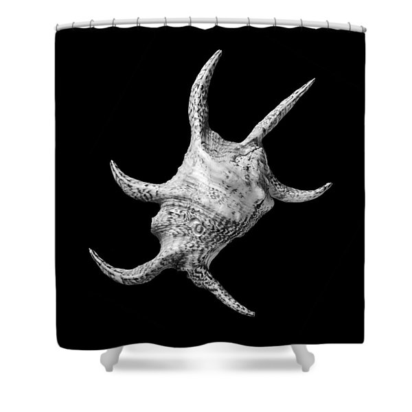 Spider Conch Seashell Shower Curtain