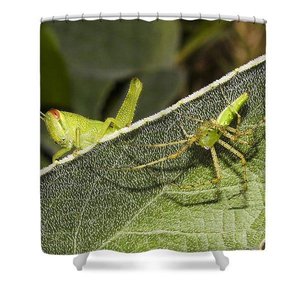 Spider-grasshopper Standoff Shower Curtain