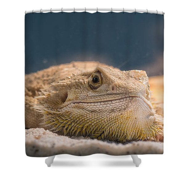 Spiked One Shower Curtain