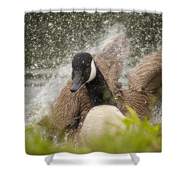 Splishing And Splashing Shower Curtain