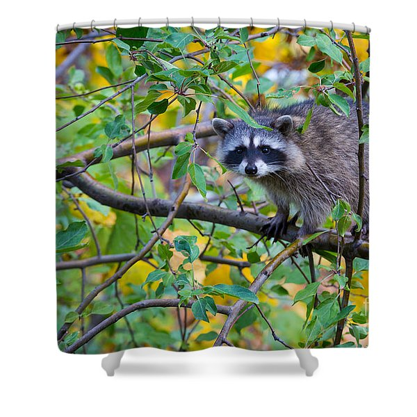 Spokane Raccoon Shower Curtain