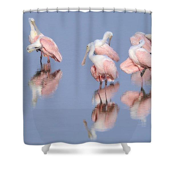 Spoonbills Preening Shower Curtain