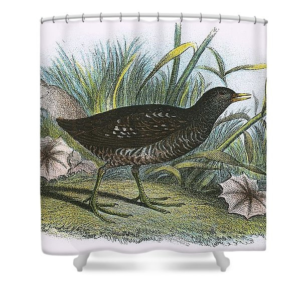 Spotted Crake Shower Curtain