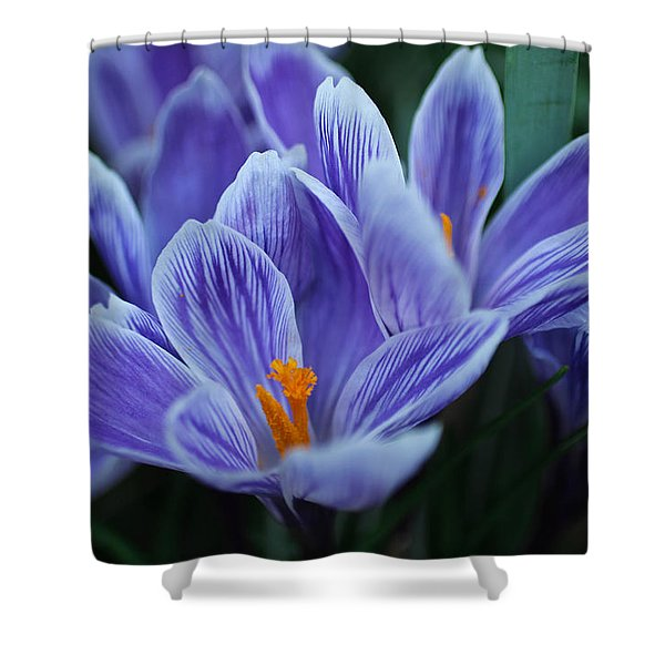 Spring Crocus Shower Curtain