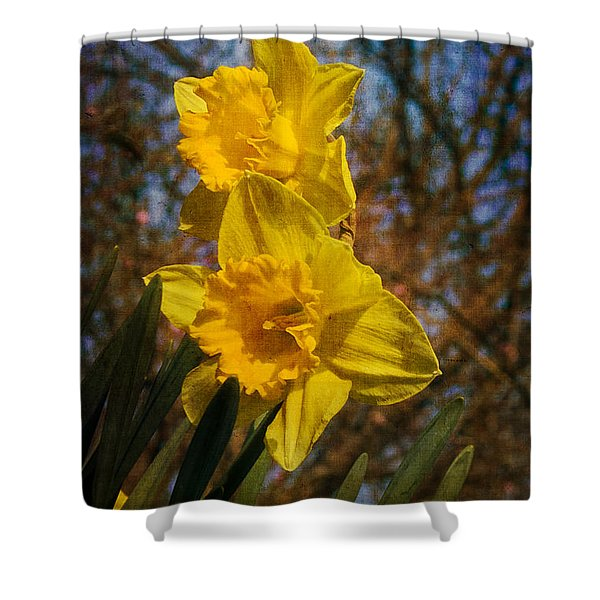 Spring Daffodils  Shower Curtain