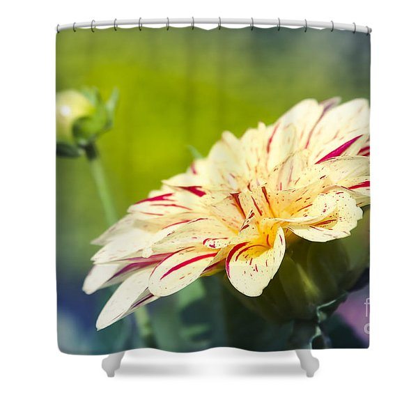 Spring Dream Jewel Tones Shower Curtain