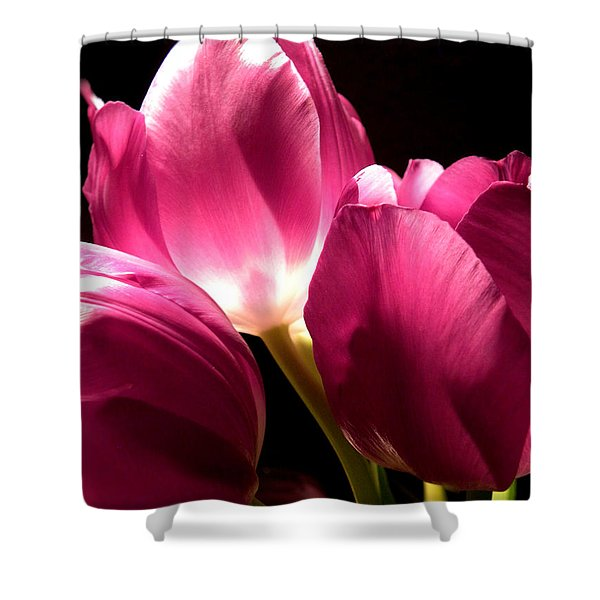 Spring Fuchsia Tulips  Shower Curtain