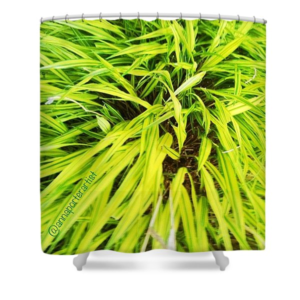 Spring Greens, A Late Post For Shower Curtain