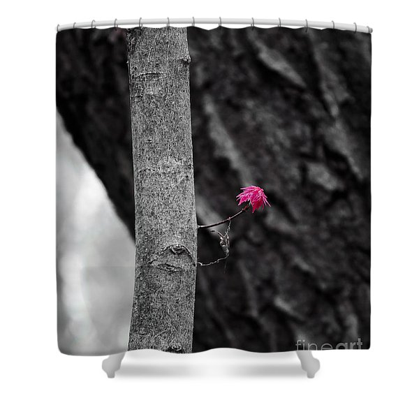 Spring Maple Growth Shower Curtain