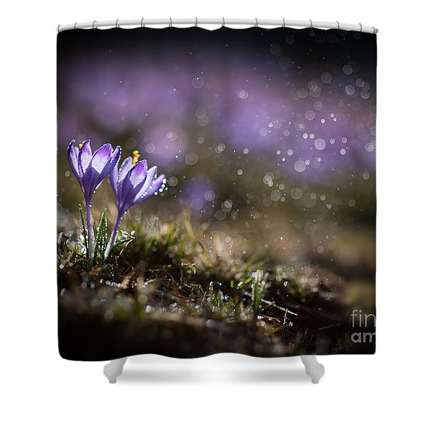 Shower Curtain featuring the photograph Spring Impression I by Jaroslaw Blaminsky