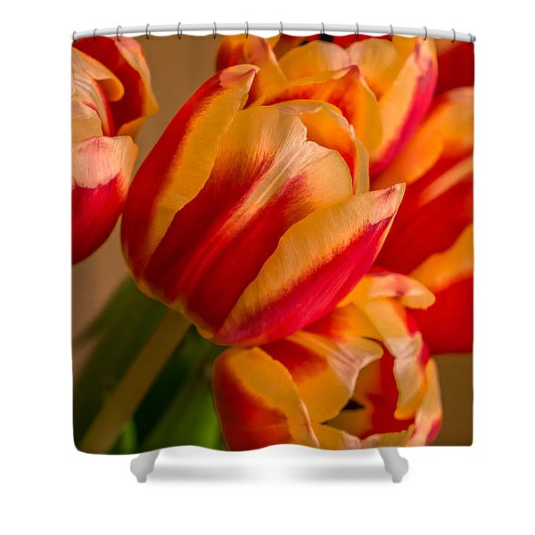 Spring Indoors Shower Curtain