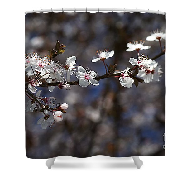 Spring White Blossom Shower Curtain