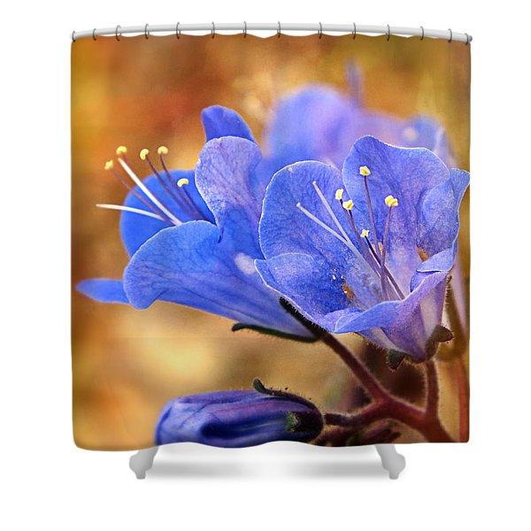 Spring Wildflowers - The Desert Bluebells Shower Curtain