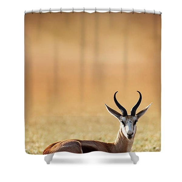 Springbok Resting On Green Desert Grass Shower Curtain