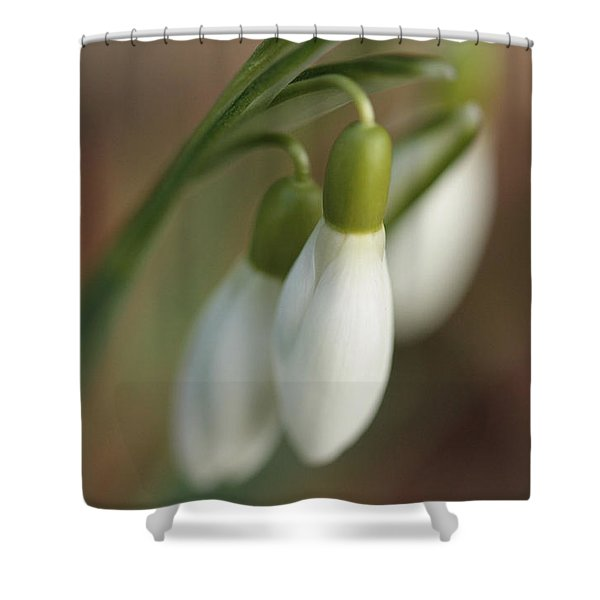 Springtime In Motion Shower Curtain