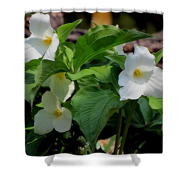 Springtime Trillium Shower Curtain