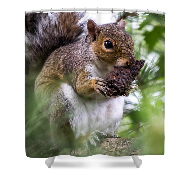 Shower Curtain featuring the photograph Squirrel With Pine Cone by Scott Lyons