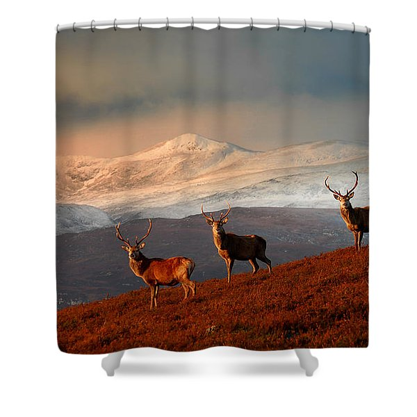 Stags At Strathglass Shower Curtain