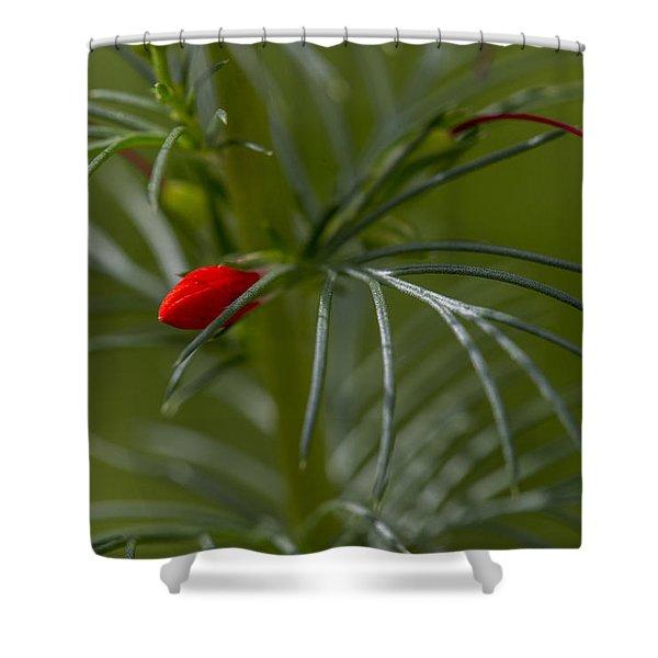 Standing Cypress Bud Shower Curtain