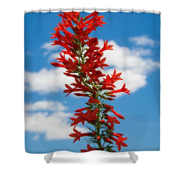Standing Cypress With Clouds Shower Curtain
