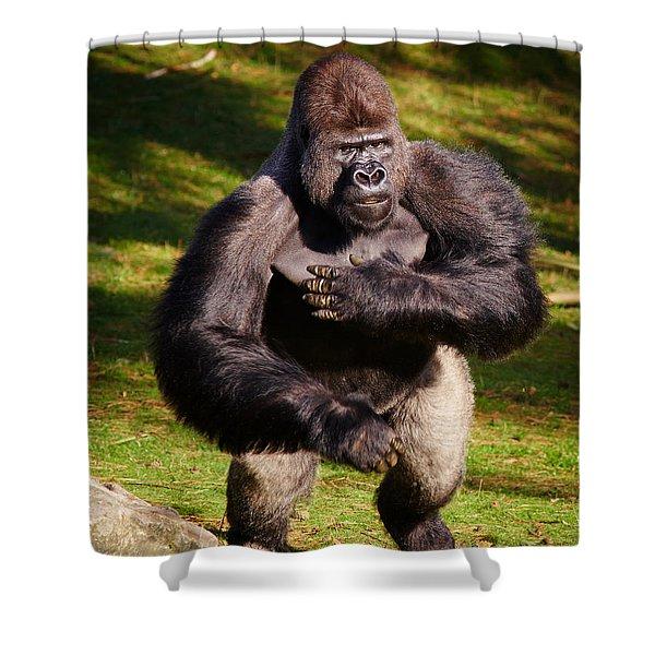 Standing Silverback Gorilla Shower Curtain