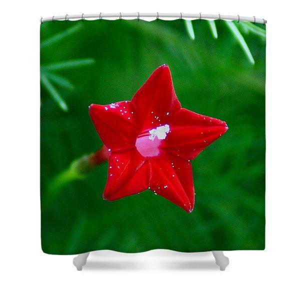 Star Glory Shower Curtain