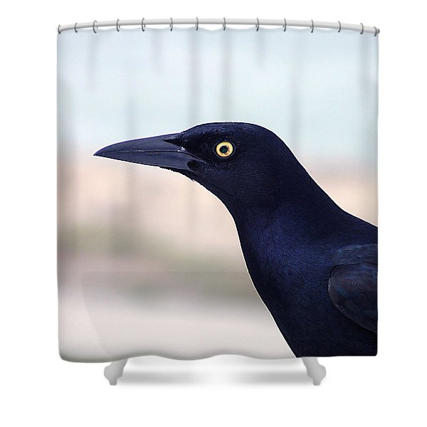 Stare Of The Male Grackle Shower Curtain