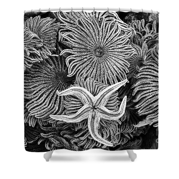 Starfish 3 Shower Curtain
