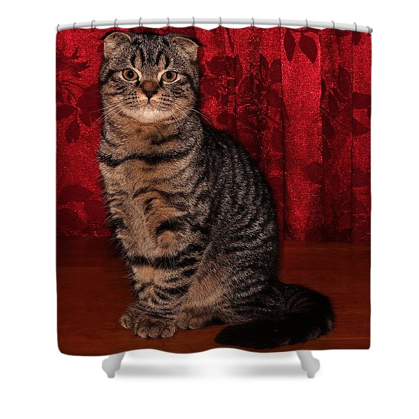 Statuesque Fold 3b Shower Curtain