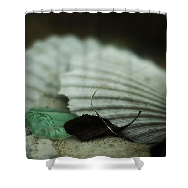 Still Life With Fossil Shells And Beach Glass Shower Curtain